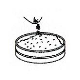 お味噌のつくり方6